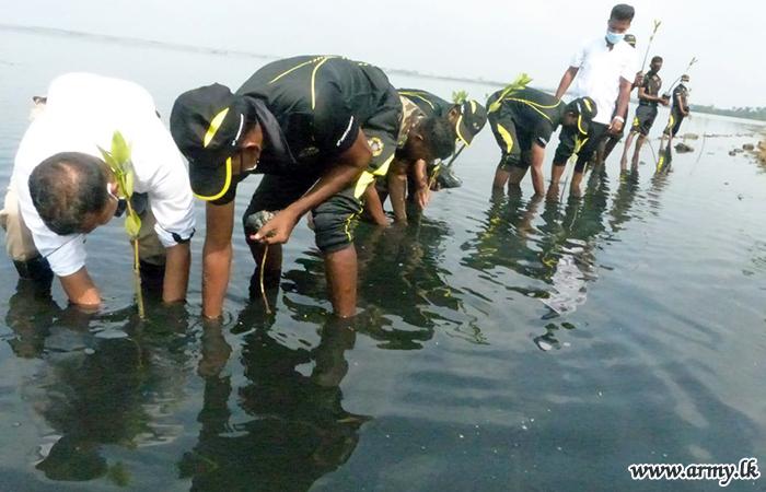 Troops Plant 500 Mangroves Around Nawanthurai Lagoon