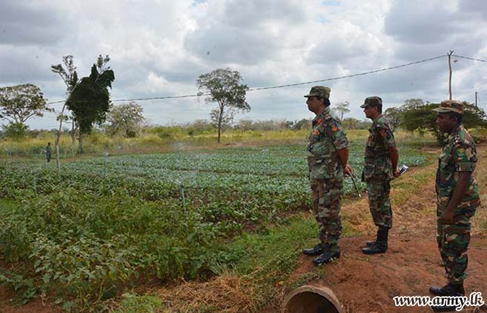 Progress in Manik Farm Evaluated